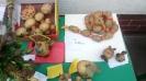 XLVI Zlot Pieczonego Ziemniaka i XI Rajd Pieczonego Ziemniaka