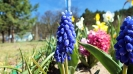 Wiosna w ogrodzie szkolnym